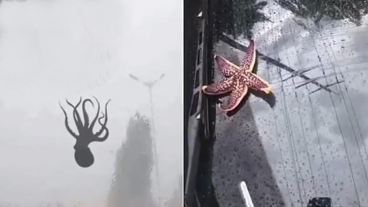 Un pulpo y una estrella de mar, llovidos del cielo en China.