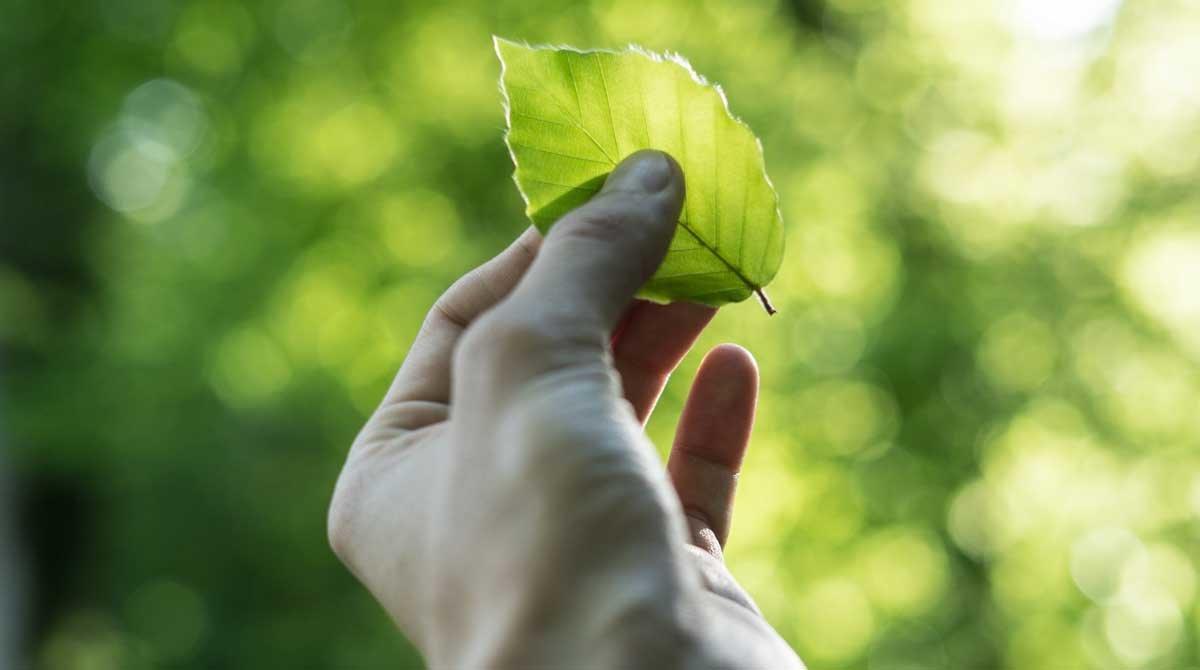 El BBVA reafirma el seu compromís amb la sostenibilitat