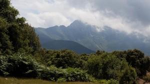Un paraje boscoso del Montseny.