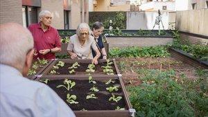 La cubierta verde de uso agrícola de la Residencia Gran Via Parc es una de las nuevas cubiertas verdes privadas de Barcelona.