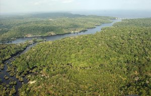 Amazonia cerca deManaos.