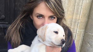 Amazon indemnitza Liz Hurley després de l'atropellament del seu gos