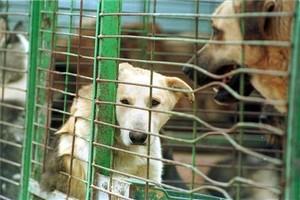Perros en una jaula de una protectora de Reus, en una imagen de archivo.