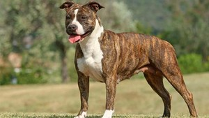 """""""Els gossos considerats perillosos estan estigmatitzats per la societat"""""""