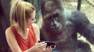 Costello y Jerani, viendo un vídeo de bebés gorilas en un smartphone.