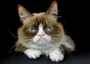 FILE - This Dec. 1, 2015 file photo shows Grumpy Cat posing for a photo in Los Angeles. Grumpy Cat, whose sour puss became an internet sensation, has died at age 7, according to her owners. Posting on social media Friday, May 17, 2019, her owners wrote Grumpy experienced complications from a urinary tract infection and âpassed away peacefullyâ in the arms of her mother on Tuesday, May 14. (AP Photo/Richard Vogel, File)