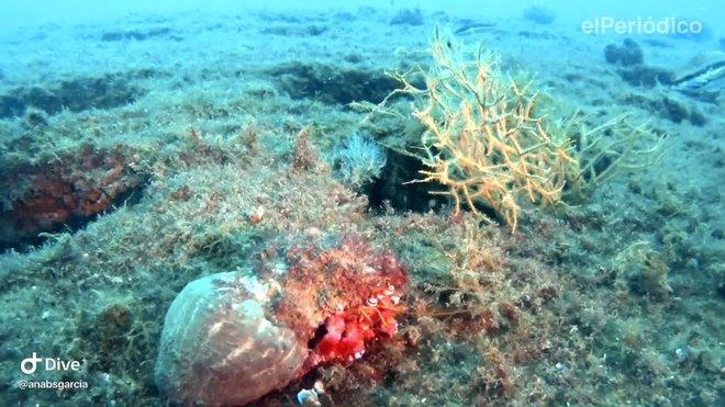inmersion en el arrecife artificial frente el espigon de la mar bella