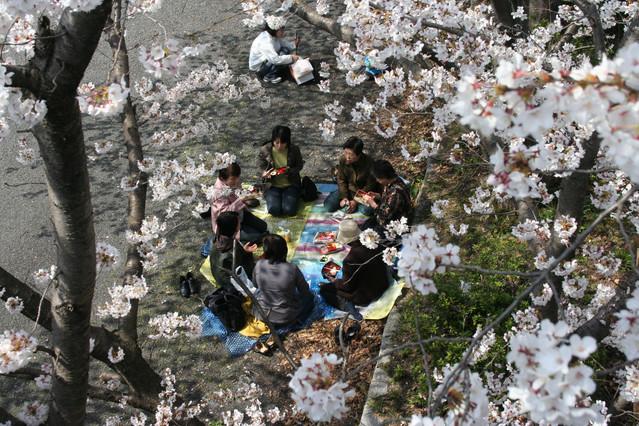 Un grupo de mujeres almuerzan bajo los cerezos de un parque de Kioto (Japón).