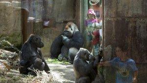 La instalación de los gorilas del Zoo de Barcelona, en agosto del 2016.