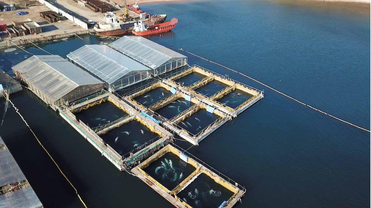 La mayor cárcel de ballenas del mundo, un problema de imagen para Vladimir Putin.