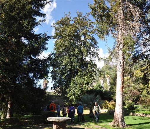 El magnolio de los jardines del Roquer