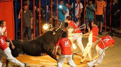 AnimaNaturalis denuncia el incremento de las fiestas con toros embolados