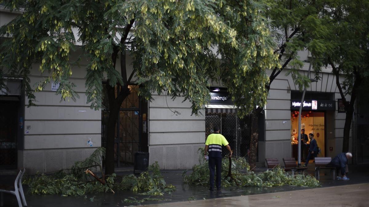 Un árbol caído en la Gal.la Placídia, en Barcelona.