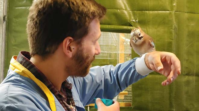 El investigador Elías García Pelegrín hacemagia delante de un córvido en un laboratorio de la Universidad de Cambridgecon el objetivo deestudiar su cognición.