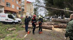 Trabajos para reestablecer la normalidad tras la caída de una quincena de árboles en Albacete.