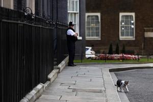 Larry, el gato de Downing Street, se pasea frente al número 10 de la calle, en Londres.