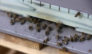 Unas abejas.