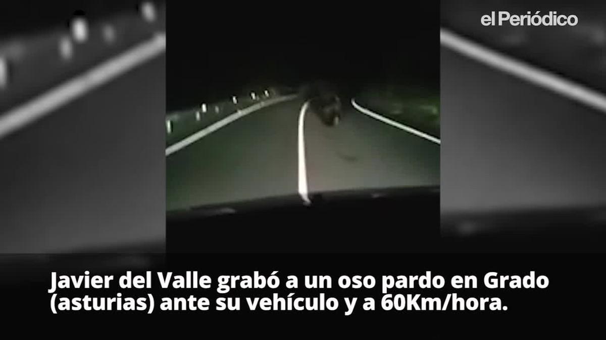 Javier del Valle graba un oso pardo ante su furgoneta.