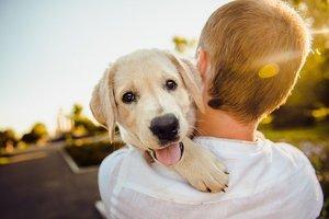 Los gadgtes para perros que tu mascota desea