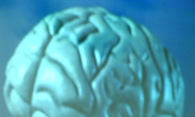 Recreación de un cerebro humano.