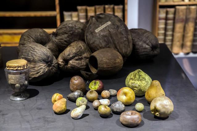 Alguns dels objectes que podem trobar des daquest dilluns a Salvadoriana, una mostra sobre el patrimoni científic de Barcelona.