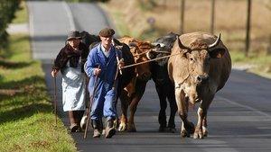 El campo gallego, pendiente de la negociación láctea