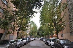 Badalona inicia una campanya extraordinària de fumigacions en 4.500 arbres de la ciutat
