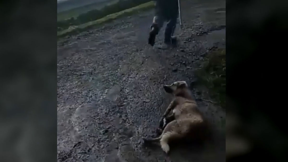 Un cazador arrastra a su perro por el suelo.