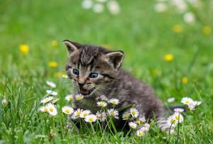 Un gato, en una imagen de archivo.