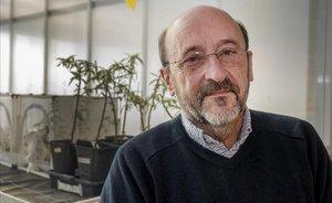 El investigador Pere Puigdomènech.