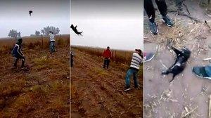 Un grupo de hombres juegan al béisbol con un perro que acaba muerto