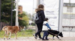 Una mujer y su hijo pasean con sus dos perros, en Boadilla del Monte (Madrid)el 16 de abril.