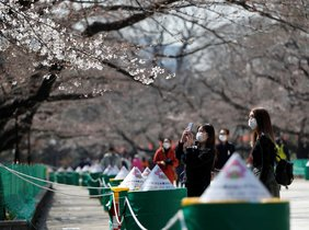 Visitors wearing a protective face masks following an outbreak of the coronavirus disease (COVID-19) look at blooming cherry blossoms next to ropes cordonning off viewing parties at the area at Ueno park in Tokyo, Japan March 19, 2020. REUTERS/Issei Kato