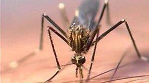El brot de virus més gran del Nil a Andalusia causa el primer mort
