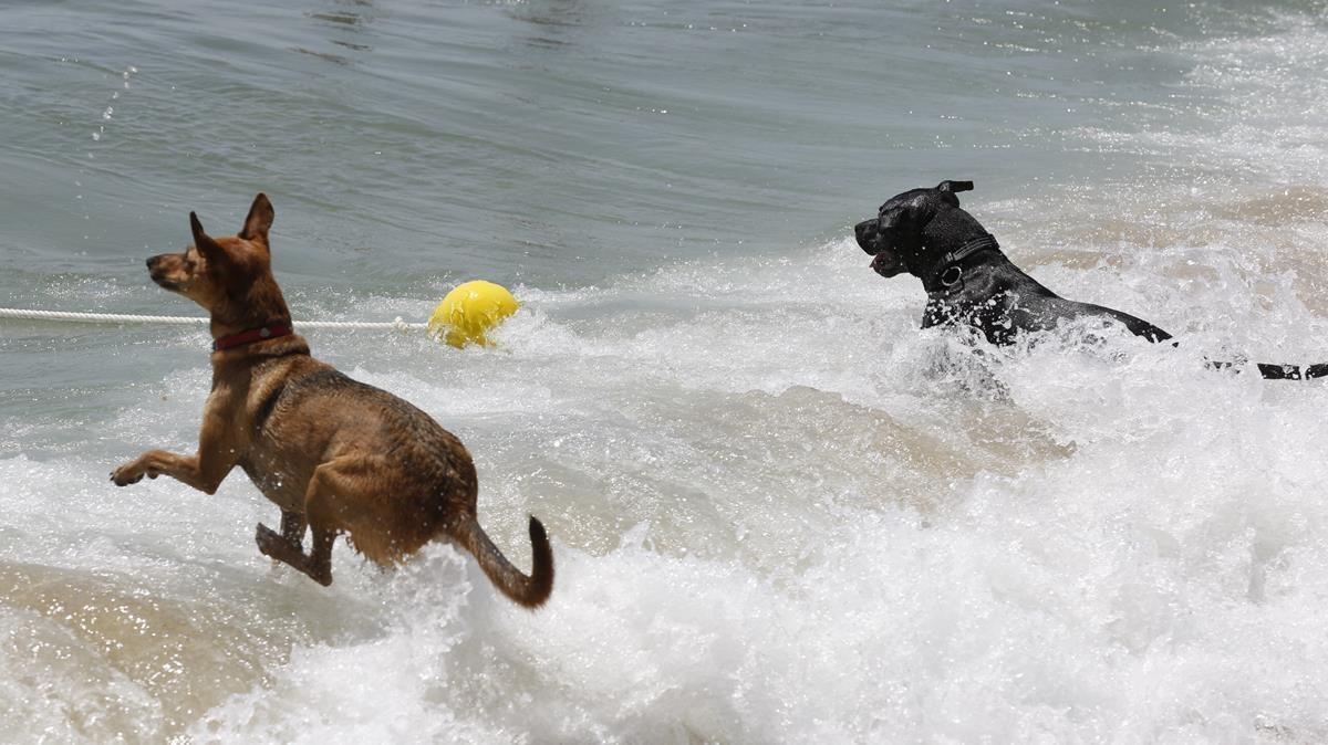 La playa de perros abre con todas las de la ley
