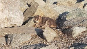 Un gato de la colonia del espigón de la Barceloneta.