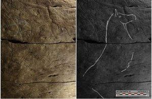 En muchos de los grabados destaca la imponente figura de unos bisones.