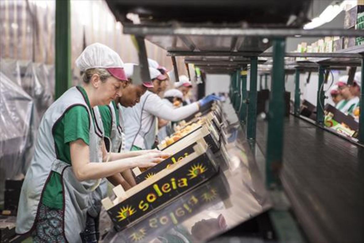 Mujeres trabajando en la selección de fruta de la empresa Fruilar.