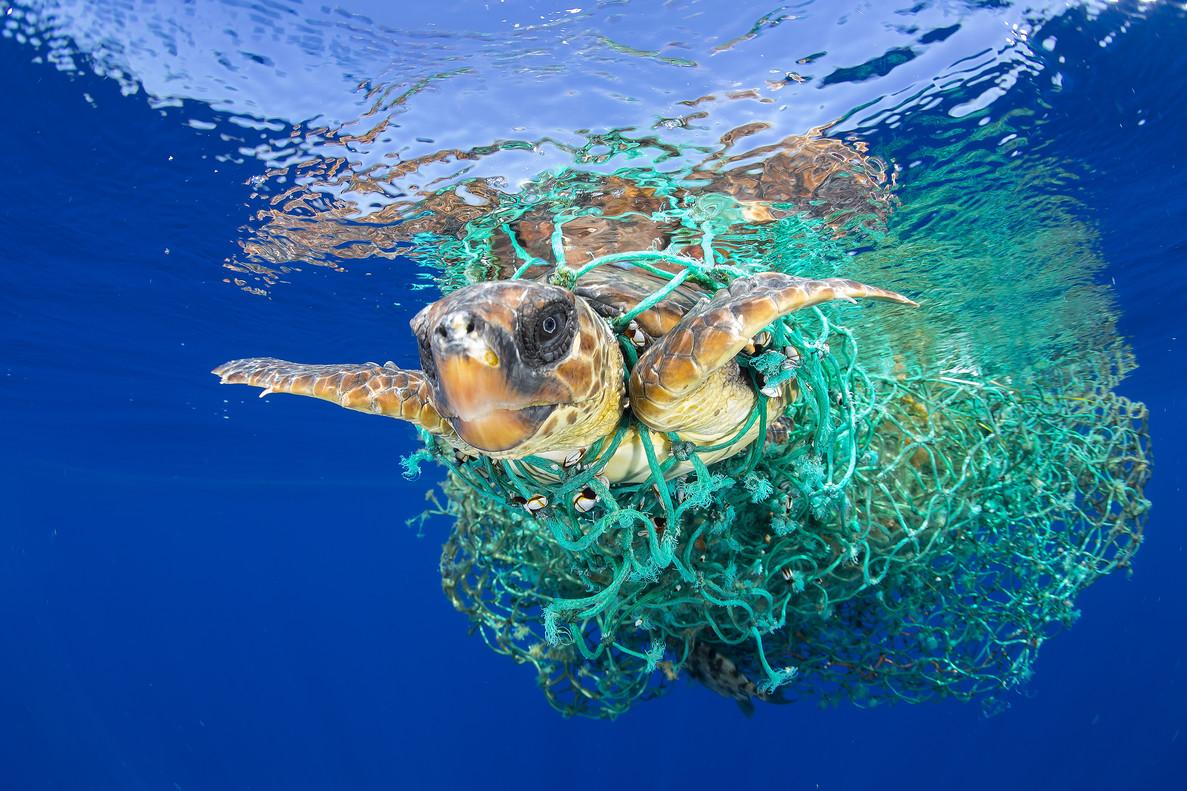 Una tortuga marina atrapada en una red de pesca frente a Tenerife.