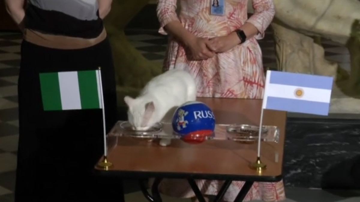 El gato Aquiles pronostica que Argentina será eliminada del Mundial.