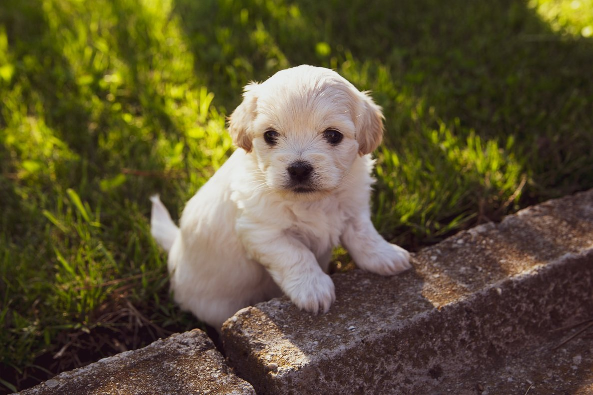 Siete beneficios de convivir con una mascota