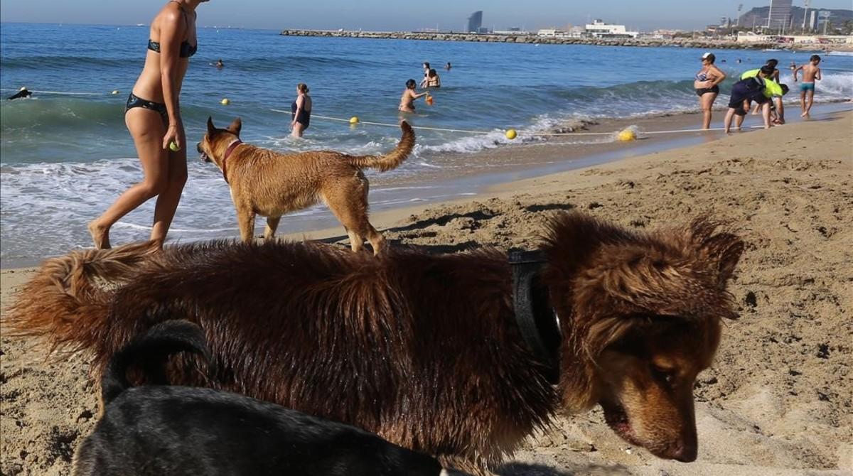 Perros, en la playa de Llevant de Barcelona, en julio del 2016.