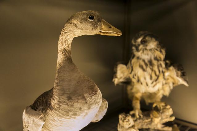 Dues aus dissecades que es poden presenciar a lexposició Salvadoriana, a partir daquest dilluns.