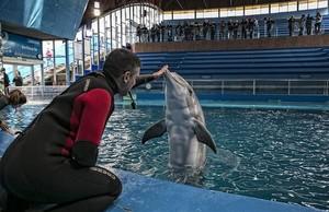 Un delfín en el Zoo de Barcelona.