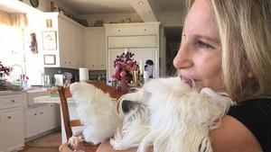 Barbra Streisand con Samantha, la mascota que ha clonado.