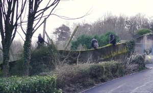 Estos chimpancés utilizaron una rama como escalera para escapar del zoo de Belfast
