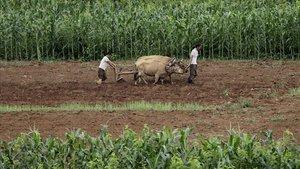 Corea del Norte ha registrado su peor cosecha en los últimos diez años.