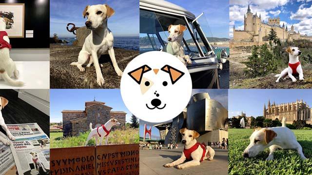 """Pipper es """"el primer perro turista que da la vuelta a España"""", resume su web. Visitará 50 destinos en un año."""