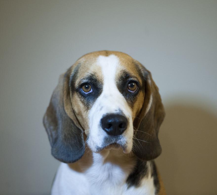 Un perro, en una foto de archivo