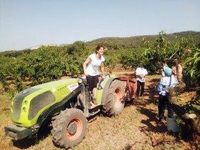 Teresa Vendrell, sobre el tractor, en la explotación que ostenta desde hace dos años en Begues (Baix Llobregat)